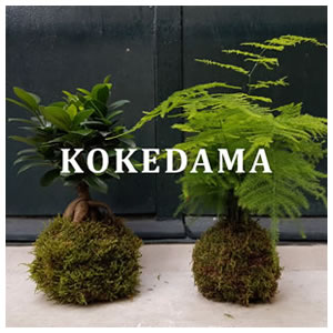 Atelier Kokedama - Les Herbes Hautes